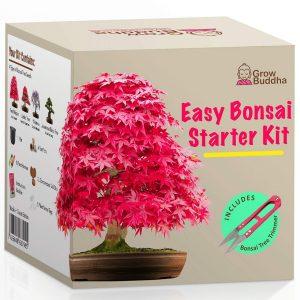 kit bonsai 4
